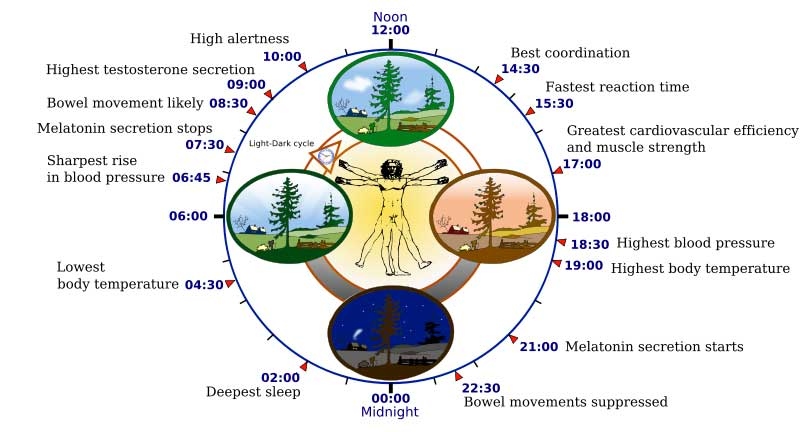 sleep wake cycle & circadian rhythm