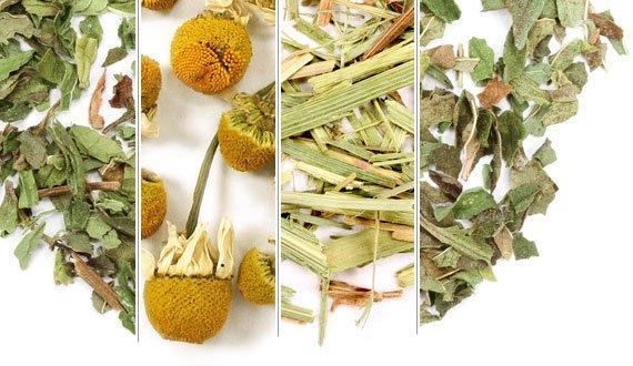Herbal Garden Sampler