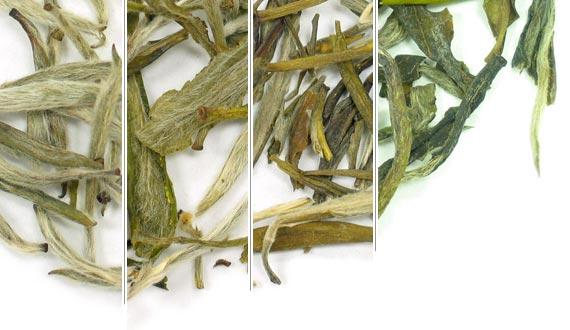 White Tea Sampler